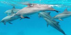 الدلافين تعقد الصداقات على أساس الاهتمام المشترك