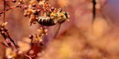 النحل الأرجنتيني يختار البلاستيك لبناء بيته