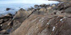 قشور من البلاستيك تغطي الصخور على ساحل جزيرة برتغالية