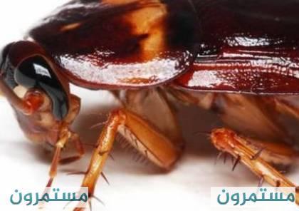 حشرة منزلية، من المستحيل قتلها والتخلص منه