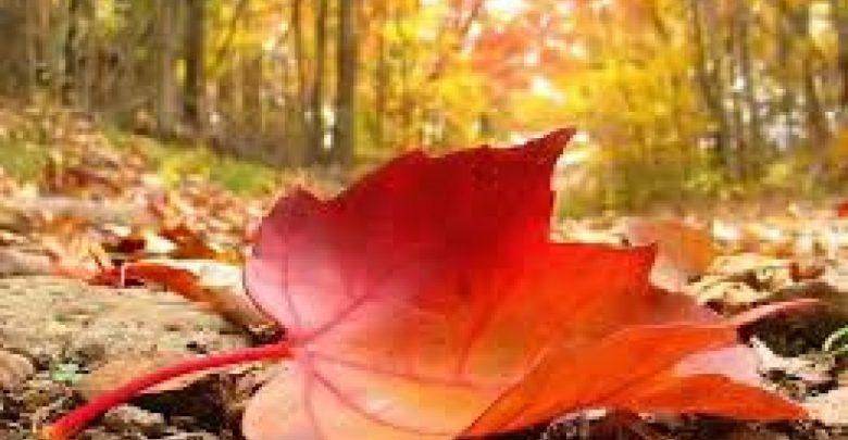 فصل الخريف : أمراض شائعة و طرق الوقاية منها ..