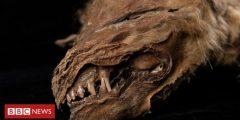 """عاش قبل 57 ألف عام  علماء يعثرون على مخلوق """"زيهور"""" ذو الوجه المخيف"""