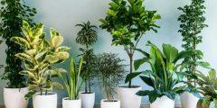 6 نباتات لاتحتاج إلي أشعة شمس لكي تنمو