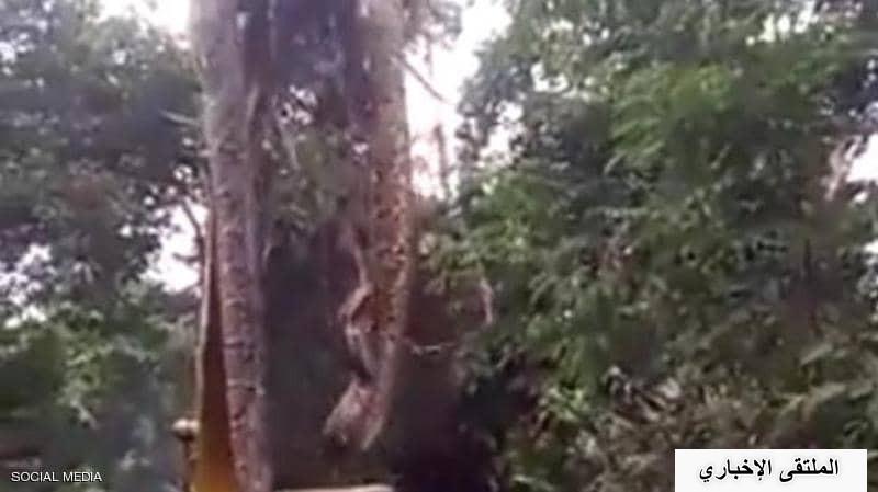 أظهر مقطع فيديو، انتشر بشكل كبير على المواقع الاجتماعية: الاستعانة بأداة عملاقة لرفع ثعبان ضخم من الأرض